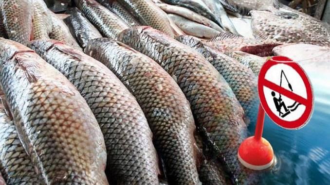 Запрет на вылов рыбы, Николаев