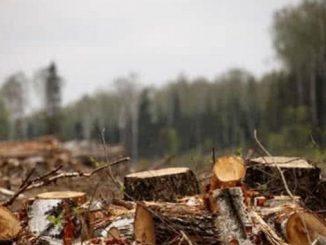 Карпаты, лес, Украина, закон