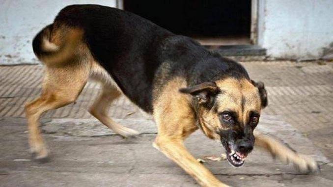 Бешеные собаки, вакцина, бешенство, Николаев