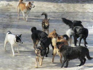 Николаев, бродячие собаки, Голобродский, КП Центр защиты животных