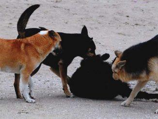 Николаев, собаки, исполком, бюджет