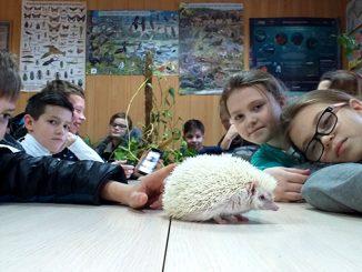 Николаевский зоопарк, карликовый еж