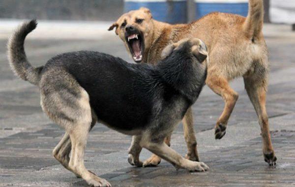 Бешеная собака, бешенство