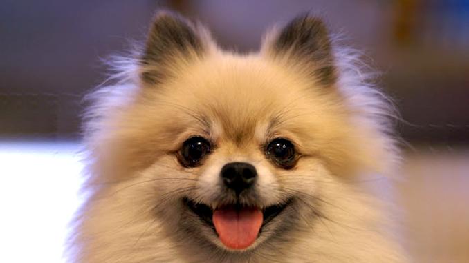 коронавирус собака