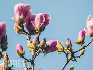 Погода, погода в Николаеве, весна, цветы, погода на 3 марта