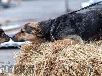 собаки, щенок, приют для собак, Николаев, взять собаку из приюта. Фото - А.Сайковский, ВН