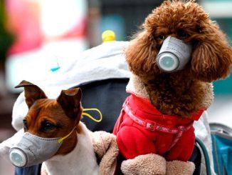 Коронавирус у животных, собаки в масках