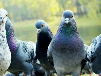 Коронавирус в Киеве, дезинфекция, умирают голуби