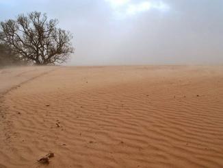 Песчаная буря, пыльная буря, Черниговская область, вырубка лесов, лесные пожары