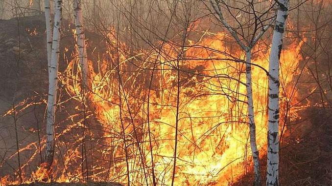 лесной пожар, Житомирская область, новости, пожар, Житомир
