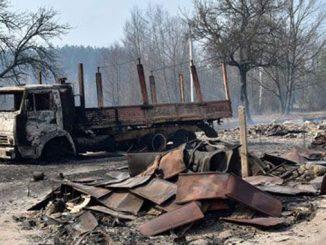лесные пожары, Житомирская область, пожар, новости, происшествия, лес, кладбище