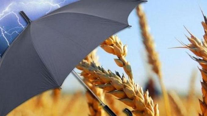 агрострахование, Высоцкий, новости, Кабмин, экономика, Минэкономики, урожай, аграрии, страхование