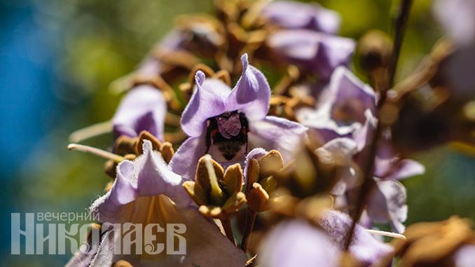 Цветы, ирисы, природа, весна