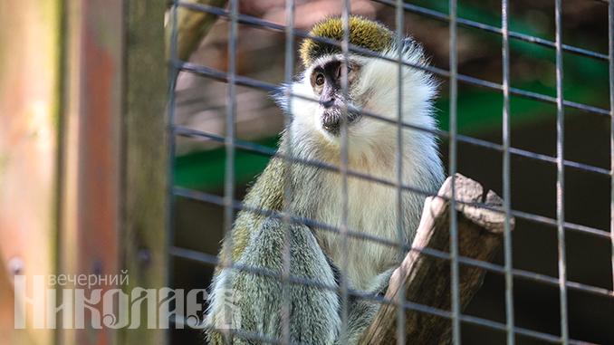 Николаевский зоопарк, животные, природа, обезьяна