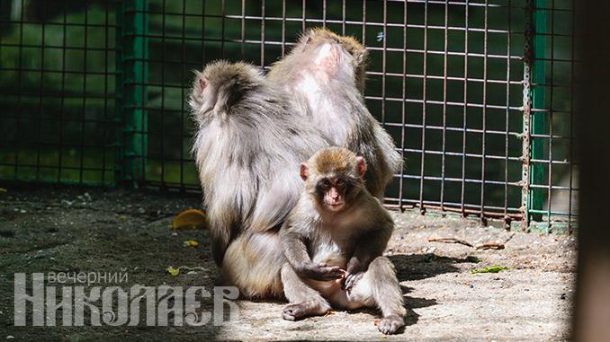 Николаевский зоопарк, животные, природа, обезьяны