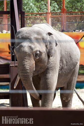 Николаевский зоопарк, слон, животные, природа