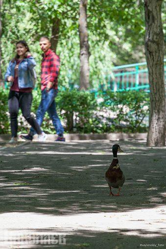 Николаевский зоопарк, утка, прогулка, лето, природа