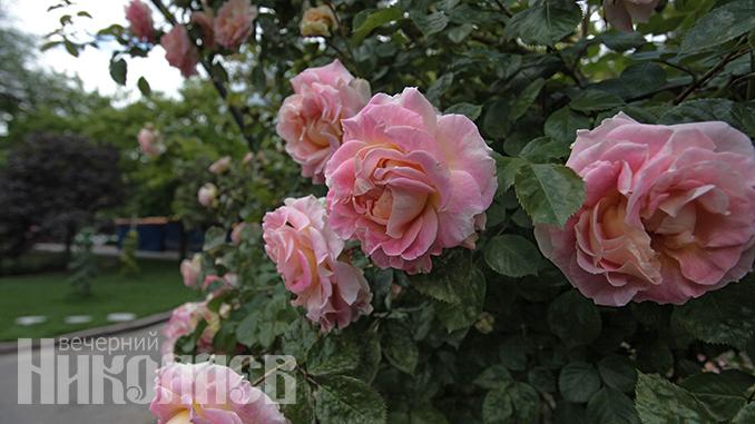 """Городок """"Сказка"""", Николаев, дети, парк, прогулка, цветы, погода, лето, розы"""