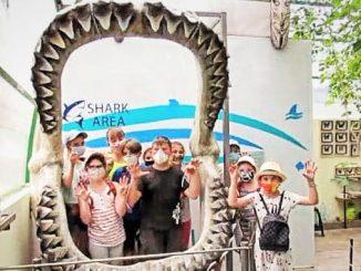 новую фотозону, Николаев, зоопарк, акула, мегалодон, новости, фотофакт, челюсти