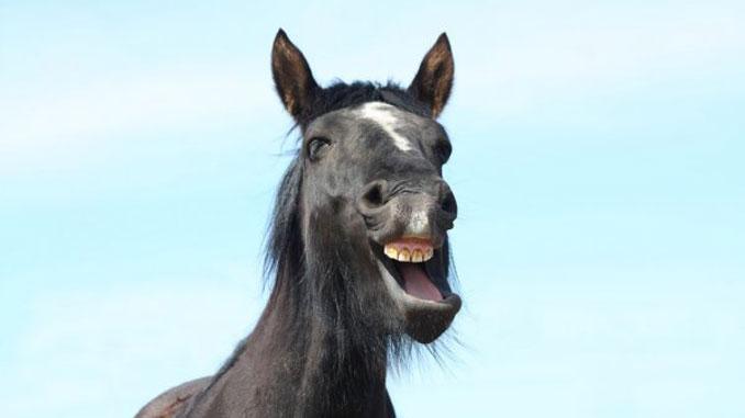 в Николаеве угнали коня, новости, Николаев, конь, лошадь, украинская верховая, порода, конно-спортивная база, суд,