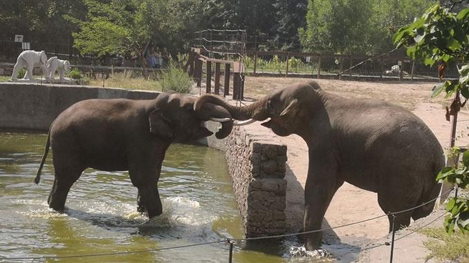 Всемирный День слонов, слоны, Николаев, зоопарк, новости