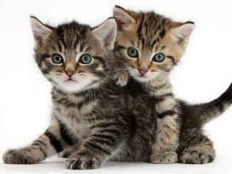Кошка, котята, Первомайск, животные, природа, защита животных