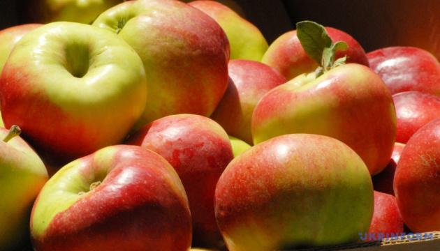 Яблоки, фрукты, продовольственные товары, урожай, аграрии, садоводство, аграрный сектор, лето