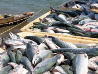 Рыба, экспорт, рыбная ловля