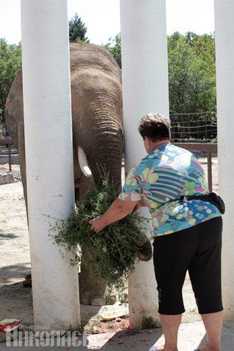 День рождения слона, Николаевский зоопарк, юннаты, животные, природа, слон (с) Фото - Александр Сайковский, ВН