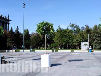 Соборная площадь, деревья в кадках (с) Фото - Александр Шенкевич, Вечерний Николаев