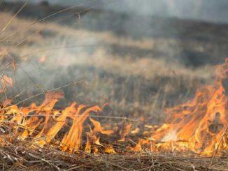предупредили о чрезвычайной пожароопасности, новости, ГСЧС, Украина, пожар, опасность, пожароопасность, внимание