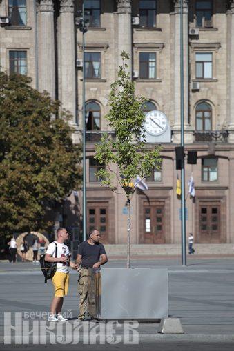 День города 2020 в Николаеве, Соборная площадь, деревья в кадках на Соборной площади (с) Фото - Александр Сайковский, ВН