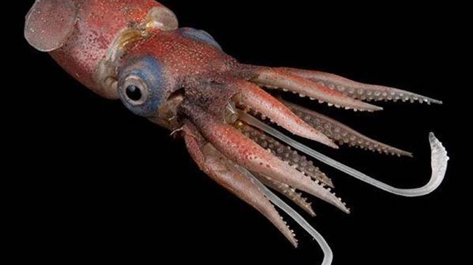 Кальмар, в Китае коронавирус обнаружили на пачке кальмаров из России