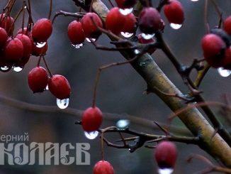 Укргидрометцентр, новости, погода, прогноз, Погода в Украине, дождь, снег, весна (с) Фото - А. Сайковский, Вечерний Николаев