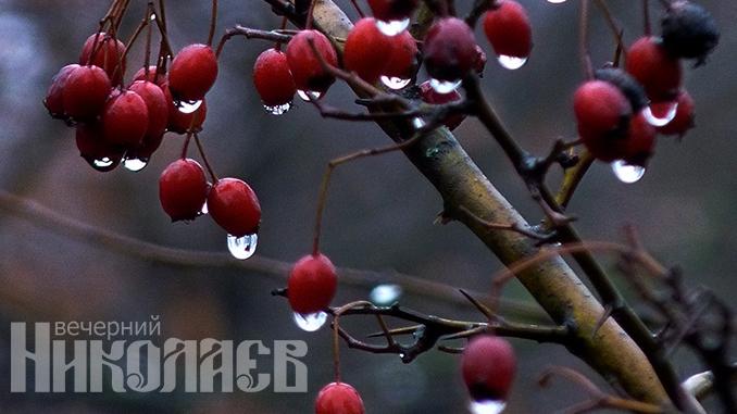Погода в Украине, зима, погода в Николаеве, туман, дождь, осень, весна (с) Фото - А. Сайковский, Вечерний Николаев