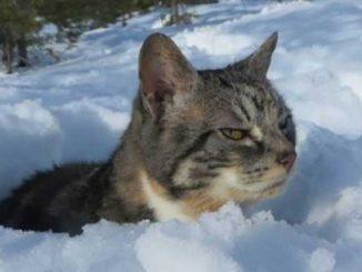 ГСЧС предупреждает, новости, погода, прогноз, февраль, ГСЧС, снег, гололед, Украина