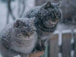 снегопад, прогноз, погода, Украина, новости,