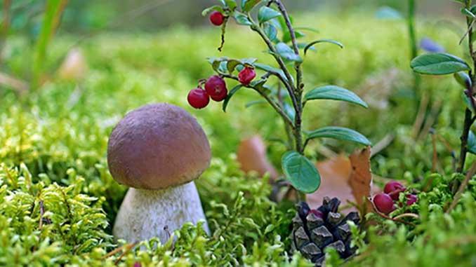сбор грибов и ягод, новости, Херсон, область, облсовет, новости, плата, грибы, ягоды, лес