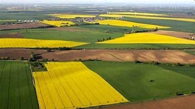Земельная реформа, новости, Украина, Лещенко, Минагрополитики, Кабмин, правительство,