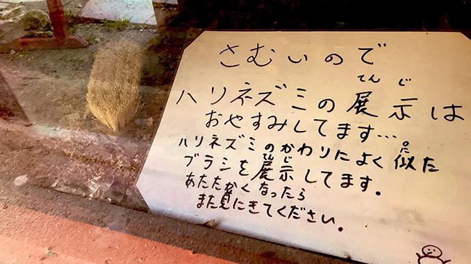 Япония, зоопарк, еж