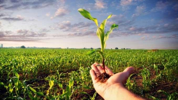 В Минэкономики, Украина, урожай, зерно, бобовые, пшеница, ячмень, рапс, подсолнечник, новости, сельское хозяйство, аграрии