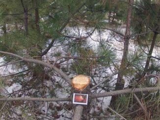 Матвеевский лес, новости, Николаев, лес, экология, заповедник, охраняемая территория, природа,