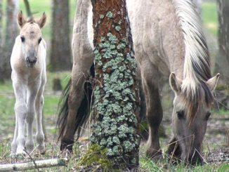 Природа, экология, национальный парк, охрана природы, дикие животные, лошадь