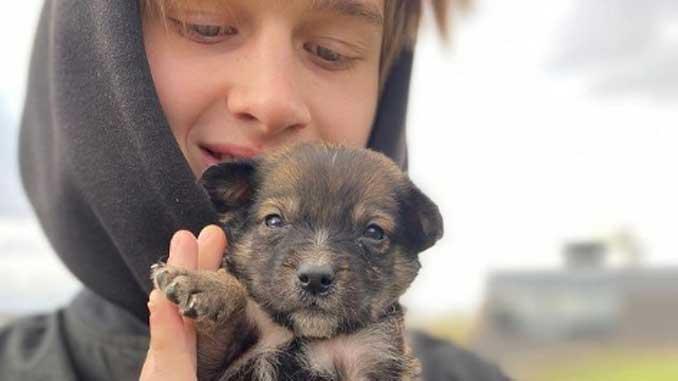 ярмарка бездомных собак, новости, анонс, Друзі поруч, собаки, бездомные, ярмарка, 8 причал