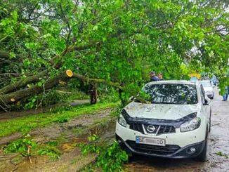 дерево упало ,Николаев, трамвай, контактные сети, происшествия, дождь,