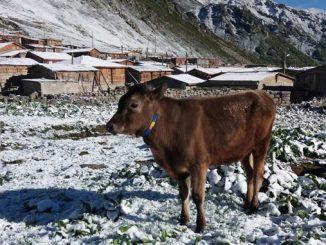 в Турции выпал снег, июнь, погода, Турция, Черное море, побережье, новости,