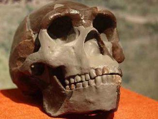 Израильские археологи, новости, Израиль, первобытные люди, археология, наука, история, останки, человек, эволюция