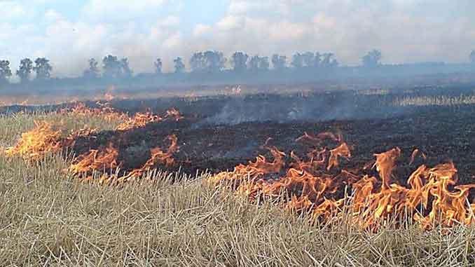 уровень пожарной опасности, новости, Николаев, область, гидрометцентр, погода, прогноз, пожарная опасность,