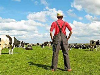 НДС 20%, новости, Украина, ставка налога, ПДВ, НДС, животноводство, овес, пшеница, семена льна, сахарная свекла, сахарный буряк,