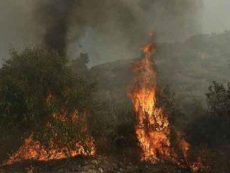 на горе Афон, новости, происшествия, Греция, пожар, гора ,Афон, лесной пожар, стихия,